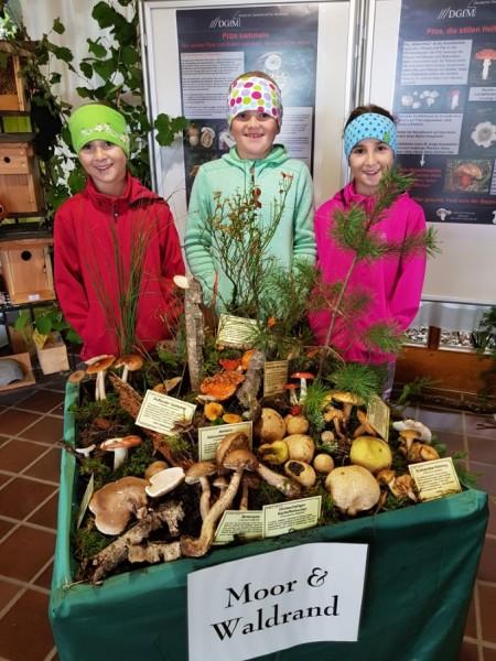Pilze Ausstellung 2